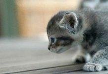 كيفية تربية القطط