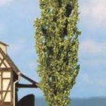 شجرة الحور الهجين